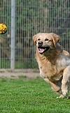 Besuch im Tierheim mit Erwerb des kleinen Hundediploms