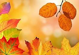 Herbstlabor