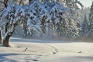 Rund um den Schnee