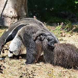 Lebendiges Lernen im Jugendclub des Frankfurter Zoos