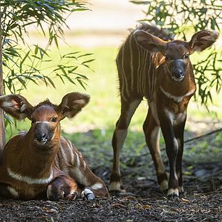 Neues aus dem Zoo Frankfurt