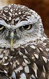Zucht und Auswilderung bedrohter Tierarten