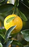 Sauer macht lustig: Führung durch die Citrus-Ausstellung