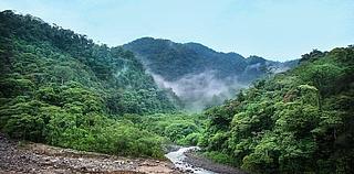"""""""Eine Reise zum Amazonas – Wir malen einen Urwald"""""""