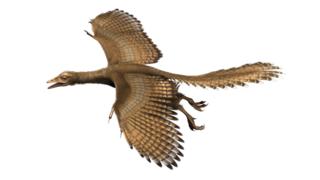 Expedition Museum: Von Vögeln, die nicht fliegen können