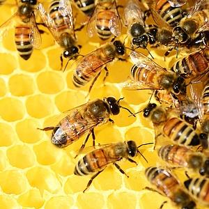Neues Museum für Bienen ab 18. August