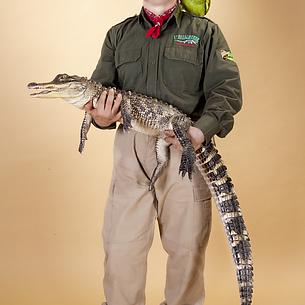 L'alligatore