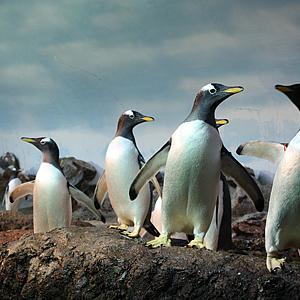 Pinguine bekommen neues Zuhause