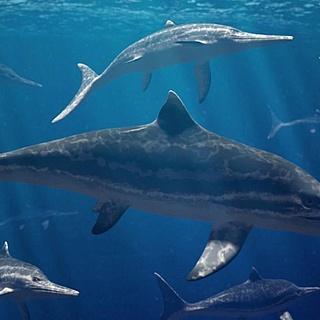 Mit Fischsauriern durchs Jurameer tauchen