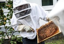 Neues Museum für Bienen