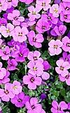 Ferien-Werkstatt: Romantischer Blütenzauber