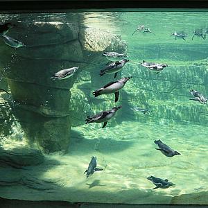 Zoo Frankfurt hebt Zeitfenster auf