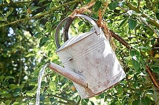 Frau Mangolds kleiner Garten