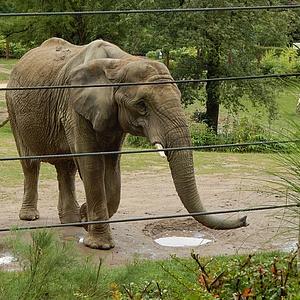Opel-Zoo hat wieder geöffnet