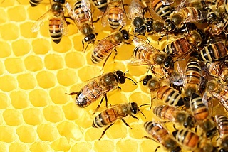 Bienenführung bei den Imkern am Wasserpark