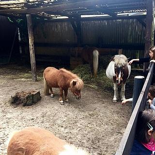Kobelt Zoo darf endlich öffnen