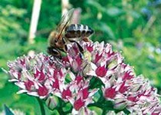 Bedeutung der Blüten für die Insekten