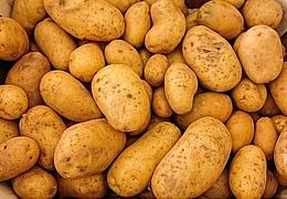 Kartoffelfest im Umweltzentrum