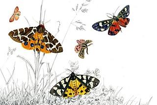 Für Dezember abgesagt: Schmetterlingen auf der Spur