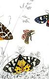 Schmetterlingen auf der Spur