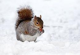 Natur-Erleben: Winterleben