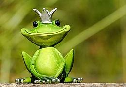 Auf den Spuren des Froschkönigs