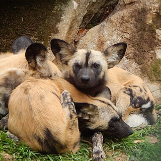 Endlich wieder Zoo: Öffnung in vorsichtigen Schritten