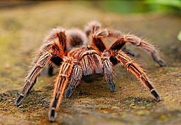 Spinnen: Ungeheuer-sympathisch