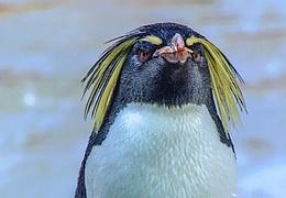 Der dickste Pinguin vom Pol - Puppenspiel