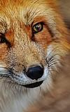 50 Jahre Wildpark und Waldfest des Fördervereins Wildpark