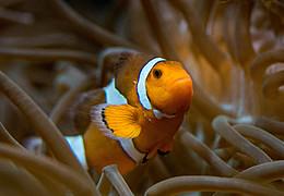 Findet Nemo im Exotarium!