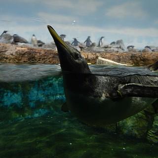 Alles neu für die Pinguine
