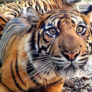 "Aktionstag zum ""Tag des Tigers"""