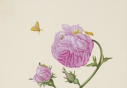 Atelierkurs - Von der Raupe zum Schmetterling