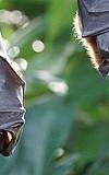 Bau der Fledermaus ein Haus! Sommerferien-Programm im Dynamikum