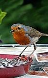 Besucherlabor - Vogelspeisekarte für den Winter