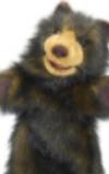 Braunbär Kuschel