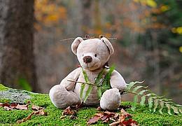 Braunbär Kuschels abenteuerliche Begegnung mit der Waldfee Knisterknaster