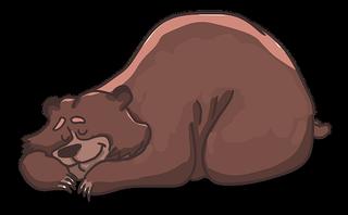 Braunbär Kuschels abenteuerliche Begegnung