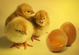 EiQ - Ran an die (Oster-)Eier
