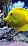 Familientag: Bunte Unterwasserwelt