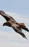 (Fast) alle Vögel fliegen hoch - und noch viele Tiere mehr!