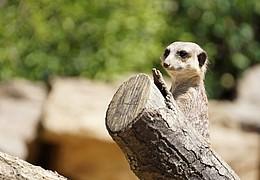 Ferien im Zoo