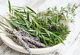 Gutes aus der Natur – Einfache Naturkosmetik zum Selbermachen