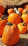 Herbst- und Kunsthandwerkermarkt