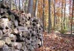 Herbstexkursion im Stadtwald