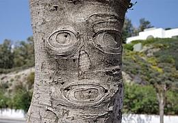 Hitze und Sonne - Warum bekommen Bäume keinen Sonnenbrand?