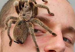 Insectophobie – Riesenspinnen & Insekten Ausstellung