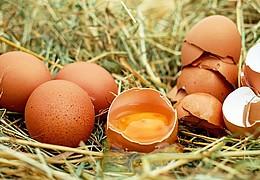 Kein Ei wie das andere?