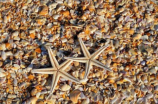Muschel, Kiesel und Co. – Entdecke die Vielfalt an Strand und Meer
